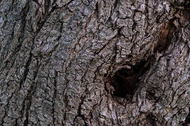 Bomen kopen voor jouw tuin, bedrijf of perceel: de voordelen en mogelijkheden