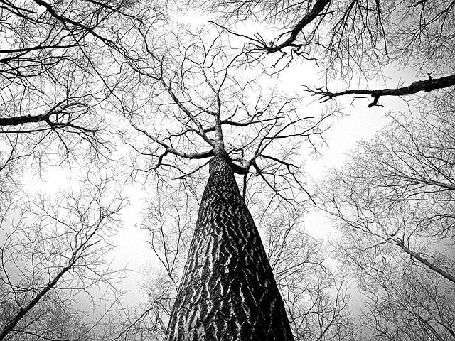 Bomen laten verwijderen: wanneer nodig? + tips en adviezen