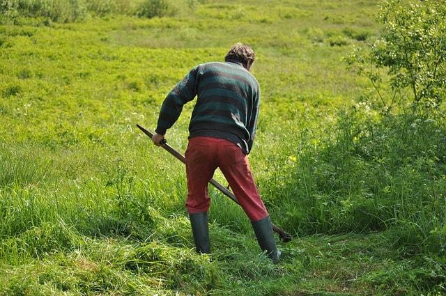 Een accu bosmaaier is ideaal bij grote en kleine tuinklussen