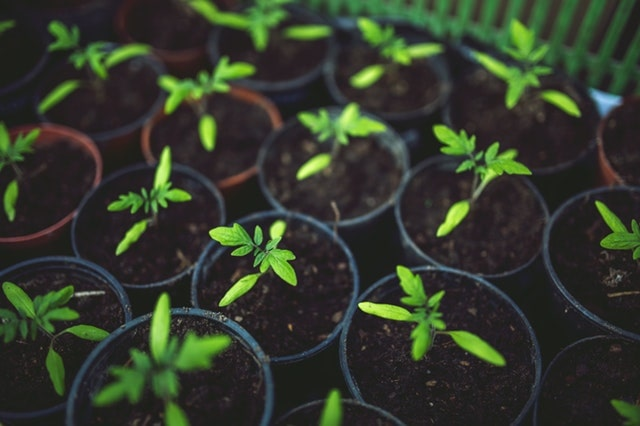 verbouwen in je eigen tuin