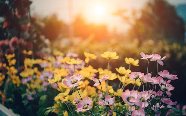 Dit zijn de leukste tuintrends van de zomer van 2021
